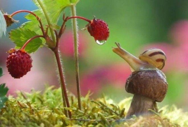 Феноменально — сказочные макро-фото художника Вячеслава Мищенко