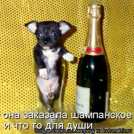 Котоматрица - она заказала шампанское  и что то для души