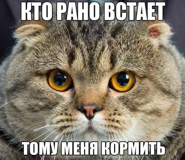 КТО РАНО ВСТАЕТ...