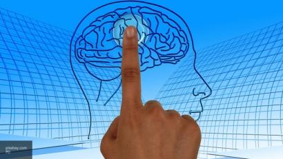 Ученые вырастили мозг из трех областей