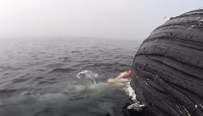 Акула нашла тушу кита и устроила пир