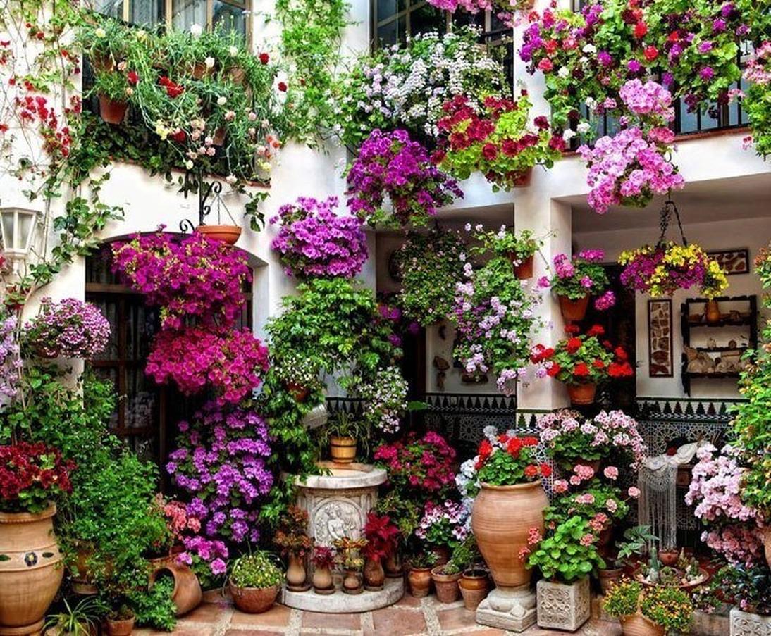 Виды цветов фото и отделка
