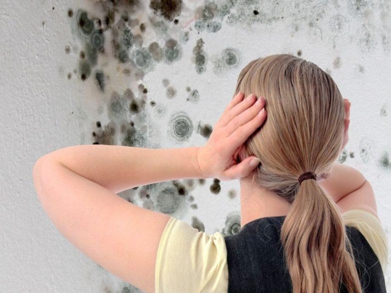 5 способов побороть плесень на стенах