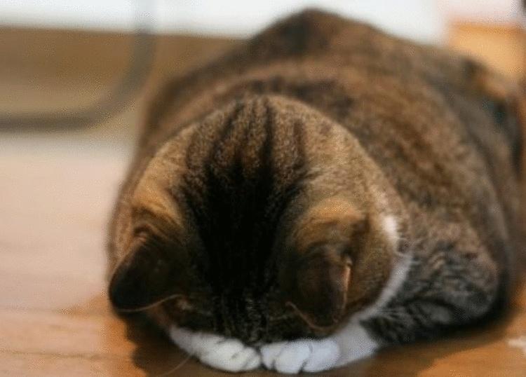 Кот обиделся: как с ним помириться или найти общий язык. Что делать?