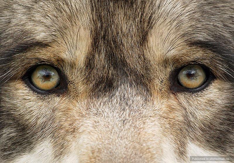 скачать торрент глаз волка - фото 2