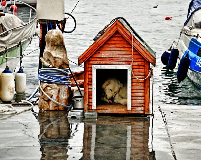Необычные собачьи будки