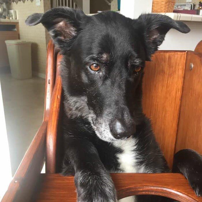 Больная собака не могла нормально есть, и хозяева нашли решение