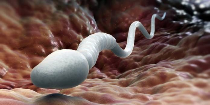 Для здоровья спермы
