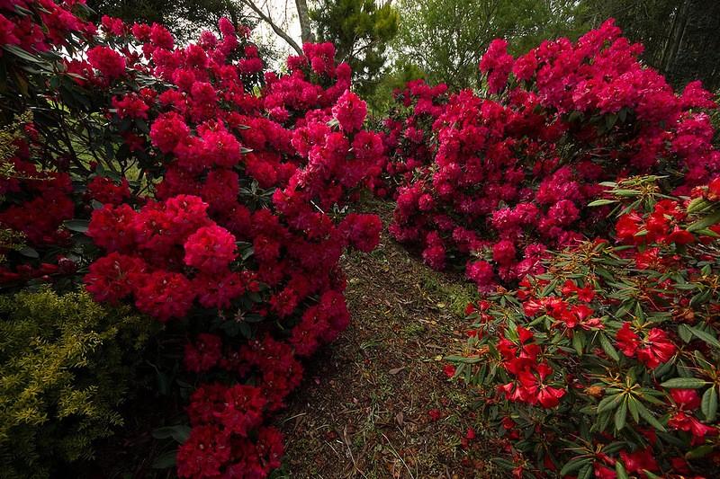 mapleglen05 Восхитительный сад Maple Glen в Новой Зеландии