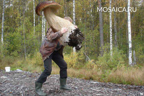 Грибников заставят сдавать грибы государству