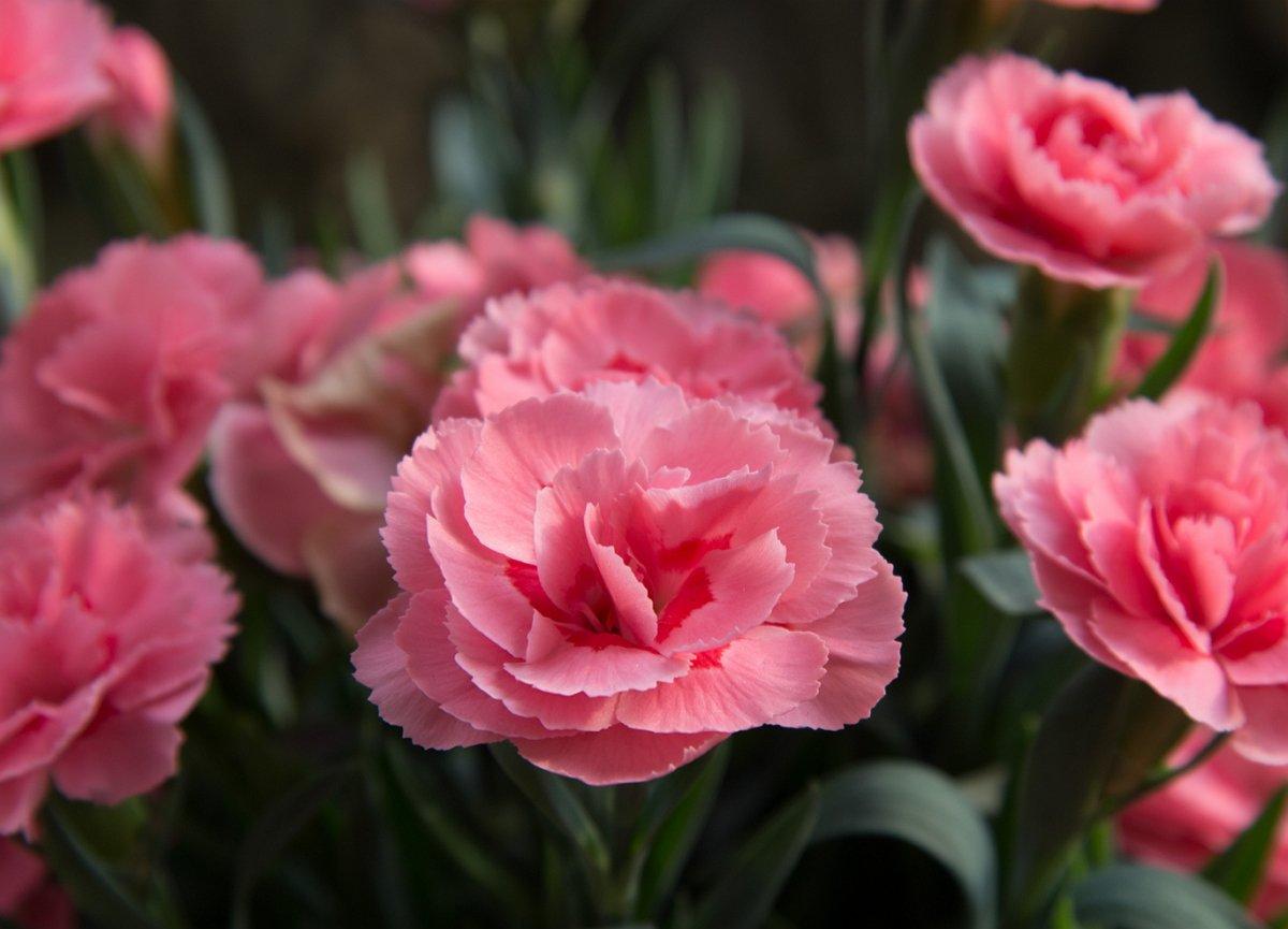 Какие цветы нужно сеять на рассаду в декабре и январе?