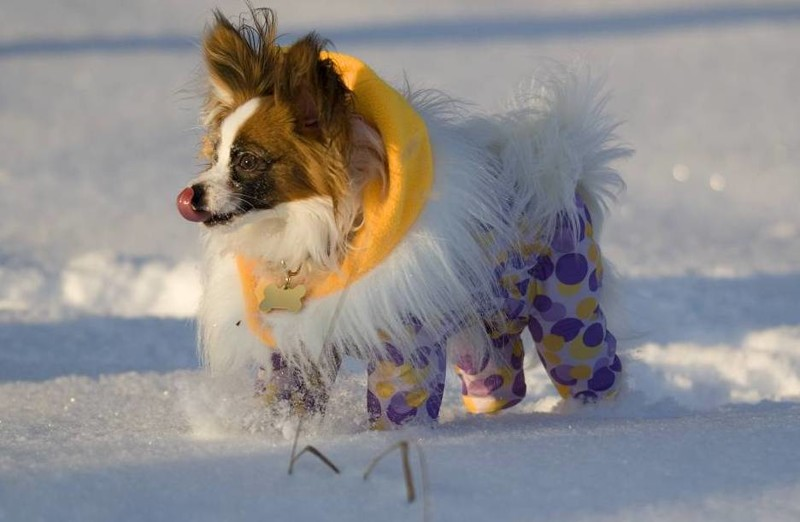 Одежда для собак: во что одеть питомца зимой?