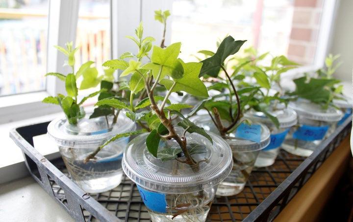 Размножение растений подручными способами