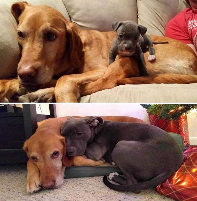 Самая милая, верная и крепкая дружба: животные, которые выросли вместе!