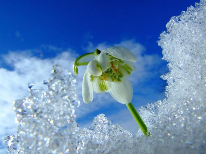 И вновь весна влюбляет меня в жизнь... Лидия Ковалевская