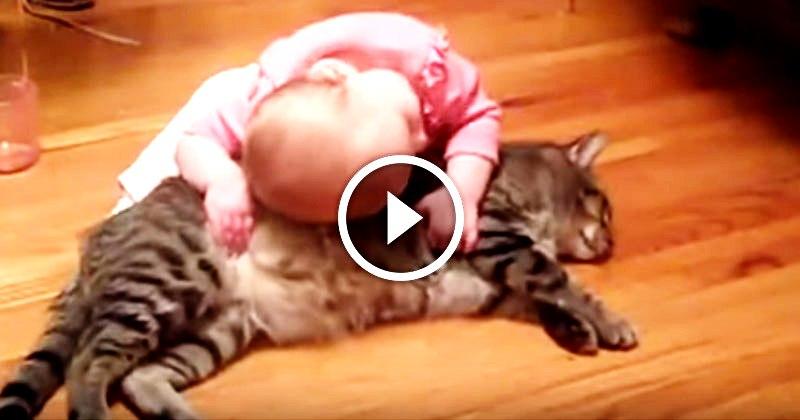 Огромный кот и его крохотная хозяйка — какая нежная дружба!