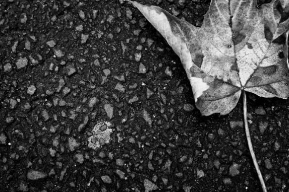 Улучшаем почву: четыре спосо…