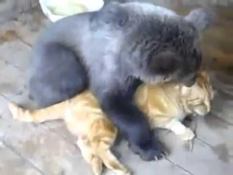 Рыжий кот и медвежонок. Кот держит медведя в строгости.