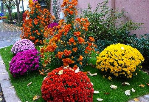 Цветы многолетние невысокие