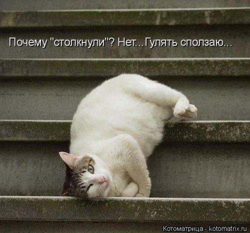 Новая котоматрица (26 шт)
