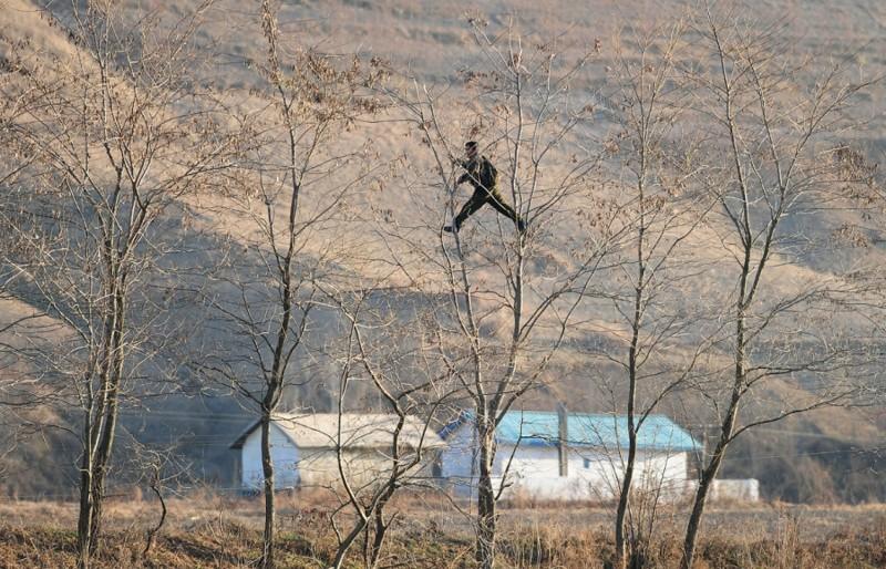 17. Северный корейский солдат лазит по деревьям на границе с Китаем, 25 ноября 2010. (ФотоFrederic J. Brown): Тоталитаризм, гранциа, китай, севераня корея