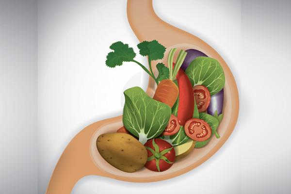 Сколько переваривается пища в желудке