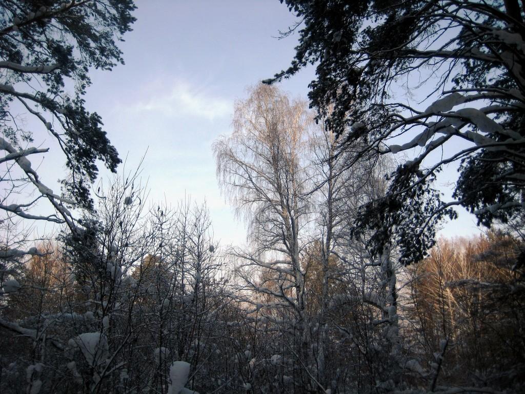 Январский денёк
