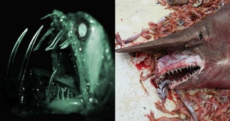 Эти чудовища из океана потря…