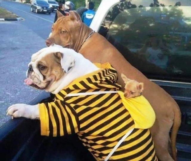 Купил парочку собак, мелкого на сдачу дали :)
