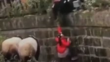 Girl Makes Dramatic Escape From Panda Enclosure