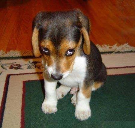 """Коты-наше няшное """"фсе"""". Любителям собак посвящается собака, виноватая, шкода"""