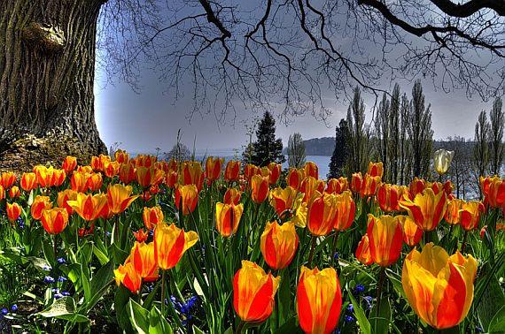 остров цветов