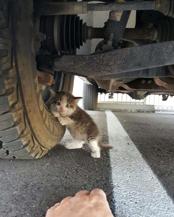 Парень нашел испуганного котенка под грузовиком и не смог сказать ему «Нет»