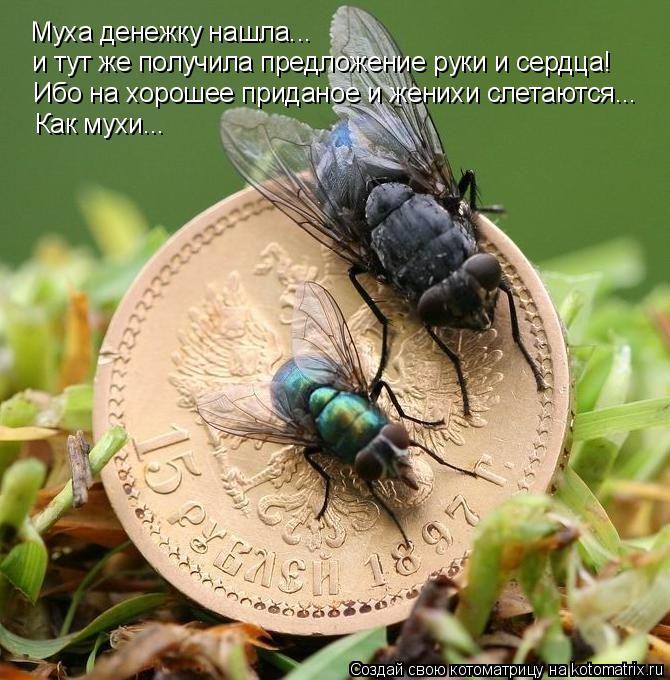 Котоматрица: Муха денежку нашла... и тут же получила предложение руки и сердца! Ибо на хорошее приданое и женихи слетаются...  Как мухи...