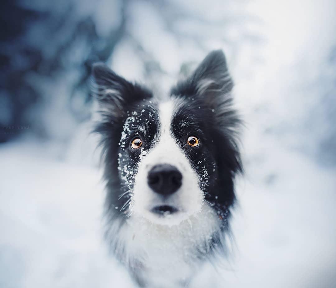 В эти снимки собак невозможн…