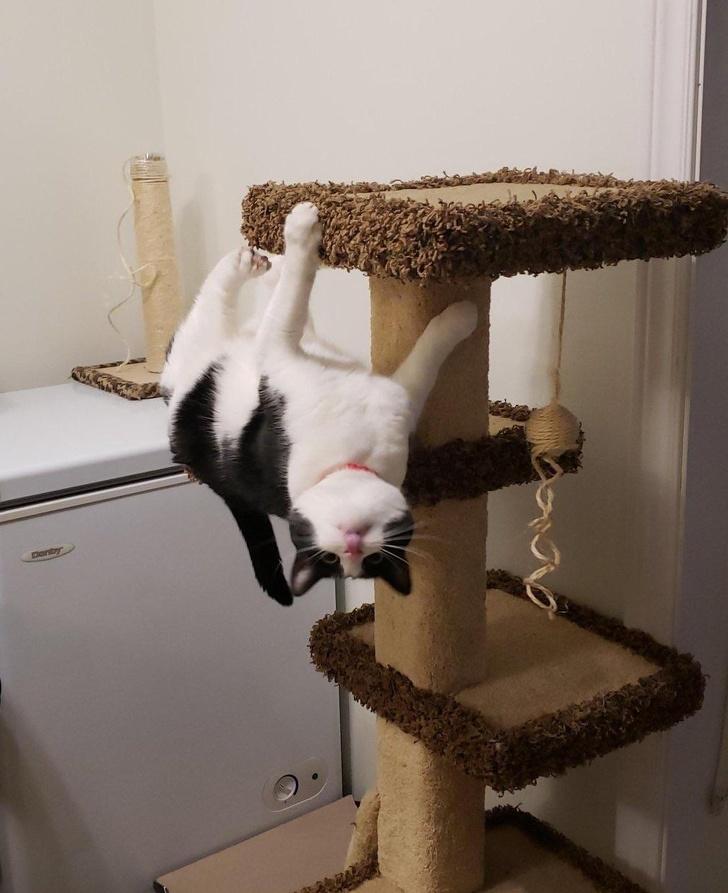 12 гибких кошек, которые нарушили все законы физики