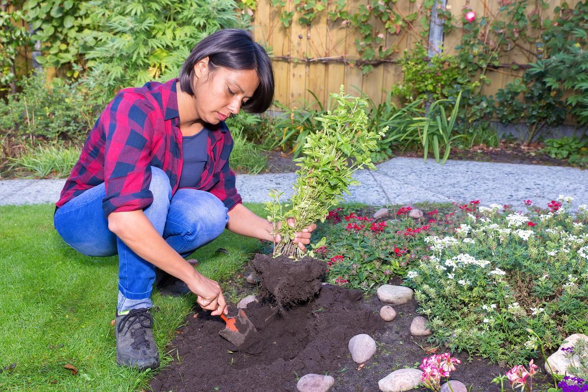 Посадка растения с земляным комом