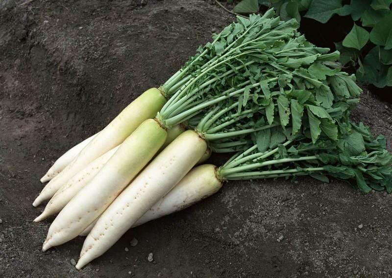 Овощи, которые могут зимовать на грядке