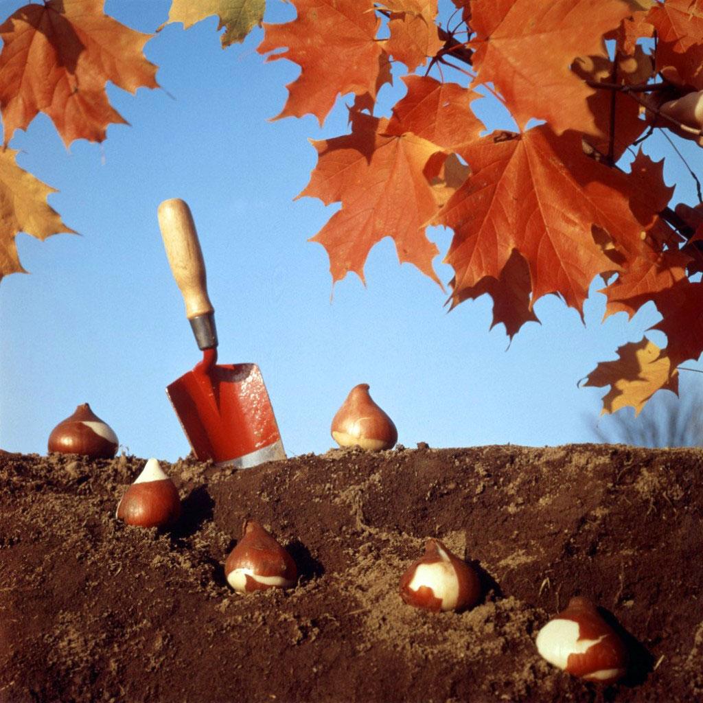 Какие цветы можно сажать осенью на даче