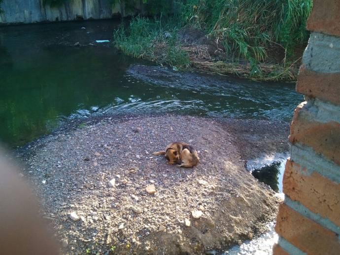 В Ростове спасли собаку, которая две недели жила на маленьком островке