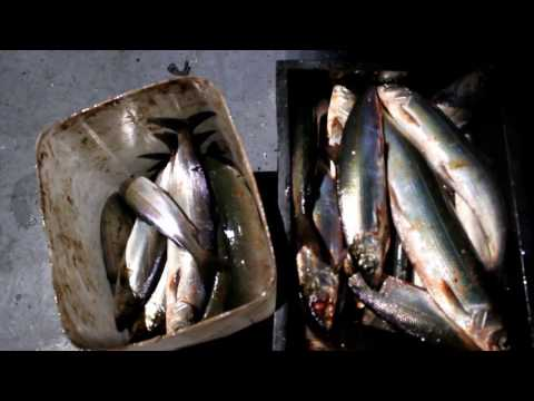 рыбалка на омуля