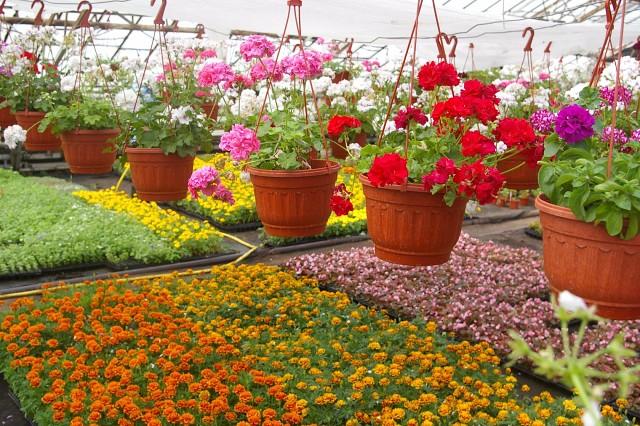 10 цветов, которые сеют на рассаду в апреле
