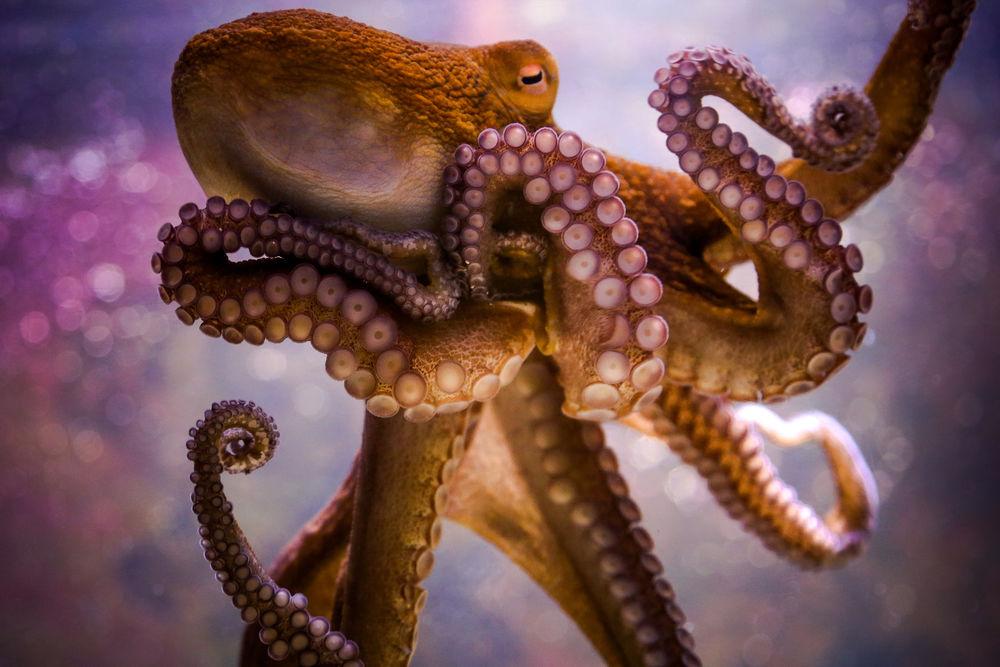Щупальца осьминога сами решают, как двигаться