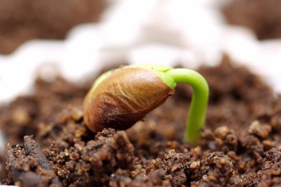 Как поторопить всходы туговсхожих семян