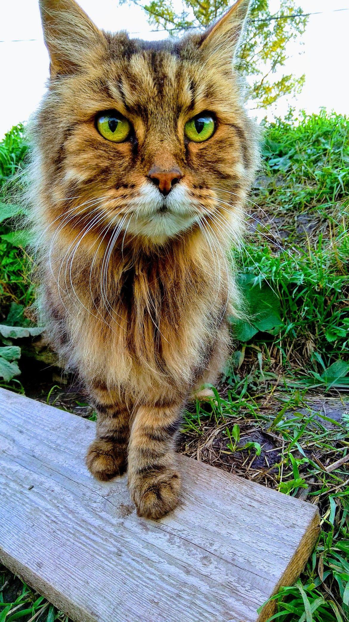 Приключения боевого кота Васьки