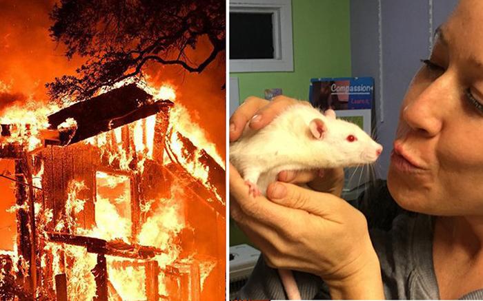 Каждая жизнь ценна! Девушки рисковали жизнью, чтобы спасти лабораторных крыс
