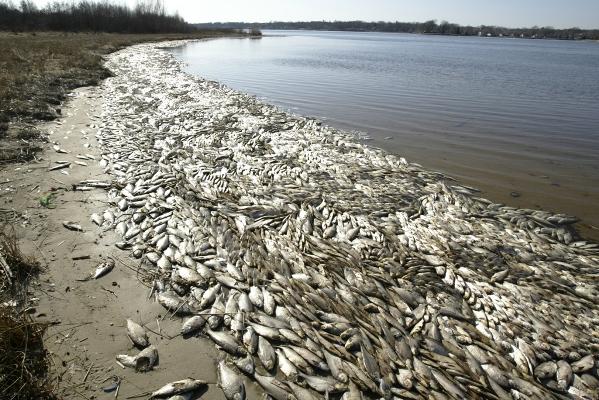 Проблемы Азовского моря