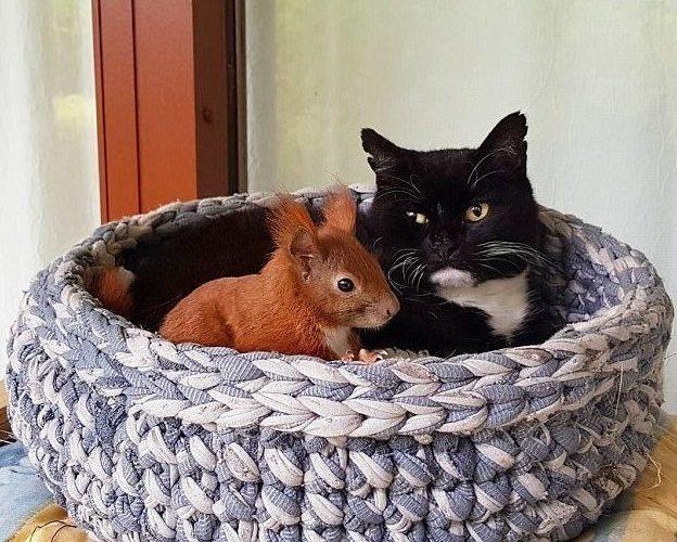 Дружба кота и белки