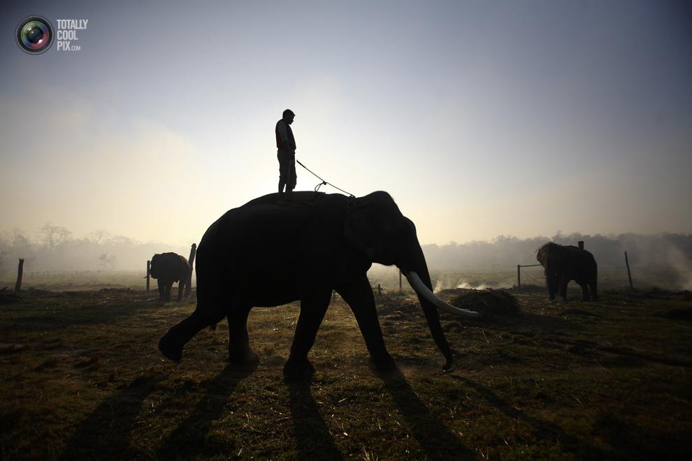 elephants 001 Слоны в национальном парке Читван