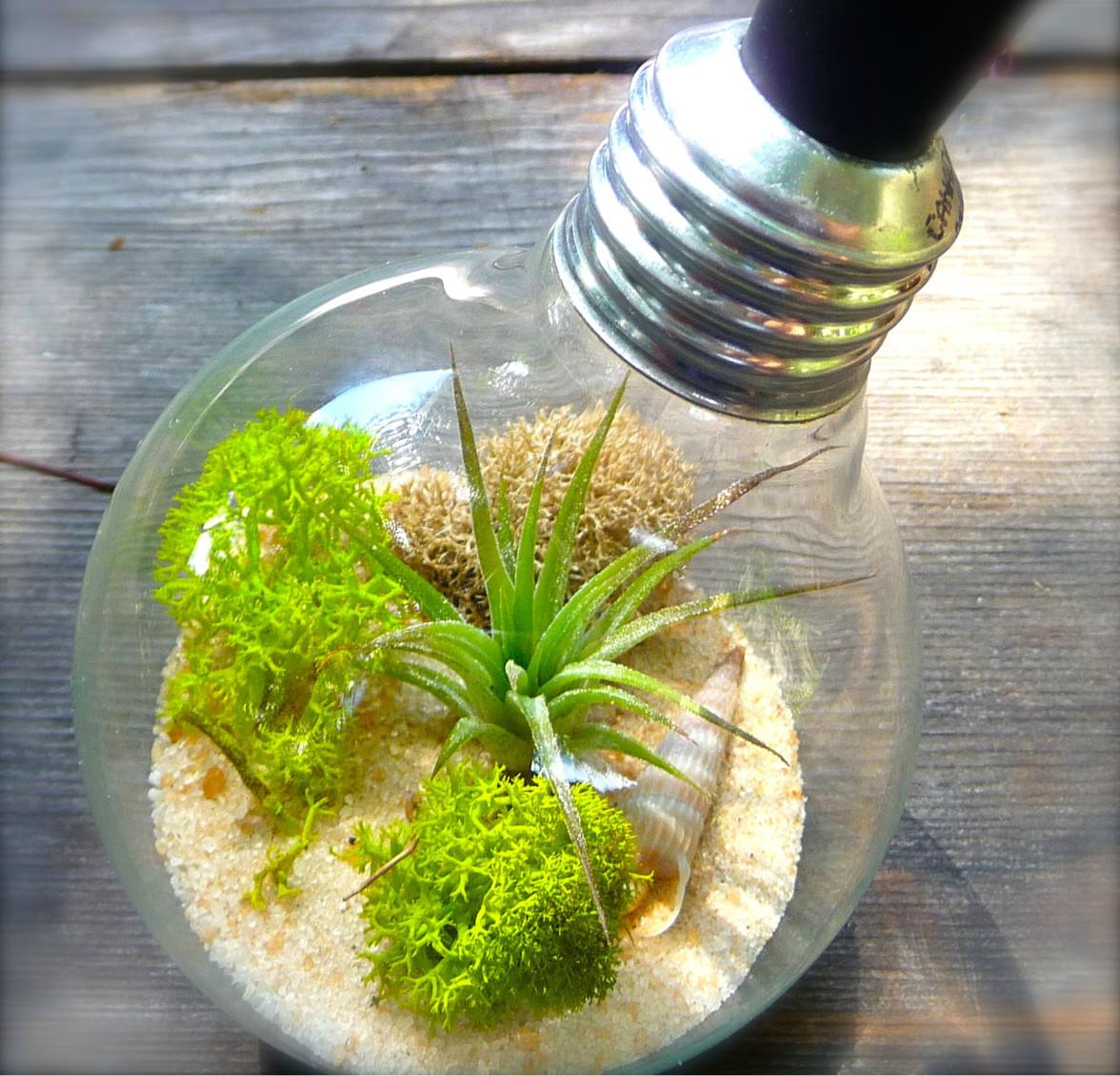 Мини-садик и даже мини-аквариум из обычной лампочки